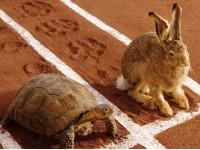 Суетливый заяц или медленная, но уверенная черепаха